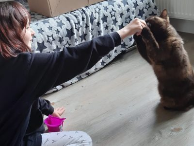 """Oberschule Ottendorf-Okrilla Ich - Sarah Olbrich - mit unserer Katze Toffee - beim clickern. Toffee macht """"Männchen"""" für ein Leckerli. Sie ist eine British Kurzhaar. Ich dachte, dass passt gut zum Thema. Das Foto haben wir extra für hier aufgenommen. Ich hoffe, damit kann ich gewinnen."""