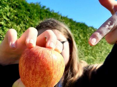 """""""An apple a day keeps the doctor away"""" ... mein erstes Sprichwort in Englisch :) Gesamtschule Bad Lippspringe Schlangen Amelie Niewels"""