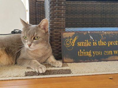 Mering Gymnasium Mering  Meine süße Katze hat immer ein schönes Lächeln;)