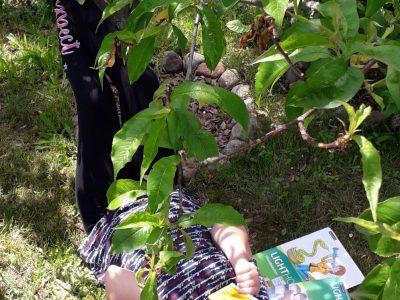 Dahme/ Mark Grundschule Dahme/ Mark Lilly Ann Puppe  Homeschooling in my green garden ;)