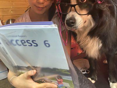 "Fürth , Helene-lange-Gymnasium.          I am teaching my dog Lulu English.  Lulu is having fun. She already knows how to say: "" (W)how!"""