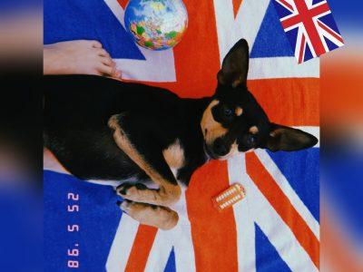 Marbella,Deutsche Schule Málaga Mein Hund und ich träumen nach London zu fliegen
