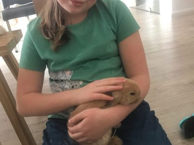 Stadt: Einbeck  Schule: Goetheschule  That's my rabbit and me. It's a minilop from United Kingdom. Her name is nube and means cloud in spanisch.