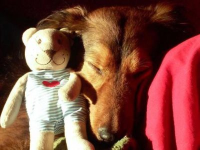 Leipzi Immanuel Kant Gymnasium   This is my dog with his Teddy! Love it :•3