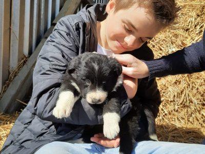 Aachen St. Leonhard Gymnasium Das ist unser Hund Karlie, der bilingual aufwächst : -)