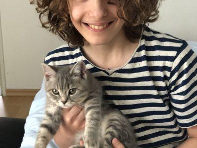 Heidenheim MPG   Meine Britisch Kurzhaar Katze  Luca Nicolae