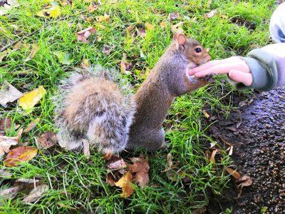 Duisburg, Albert-Einstein-Gymnasium - ich (zu sehen nur meine Hand) im Hyde Park in London. Manche Squirrels dort sind so zahm, dass sie Nüsse aus der Hand nehmen.