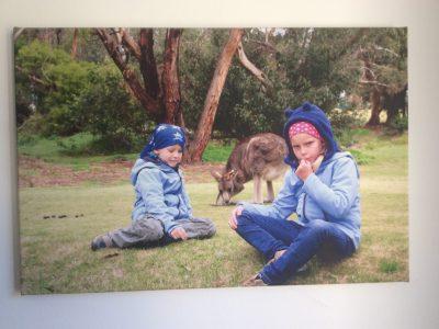 Königstein ,Taunusgymnasium Königstein   First time my brother and me being close to a kangaroo in Australia