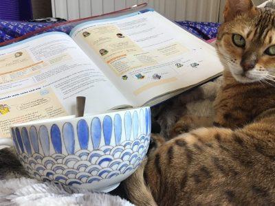 Hamburg,MCG ,Meine Katze lernt auch schon fleißig englisch!
