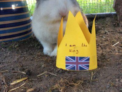 Dass findet mein Kaninchen...
