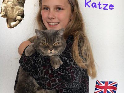 Hannover, Leibnizschule  Auf dem Foto ist meine Britisch-Kurzhaar Katze zu sehen (BKH).