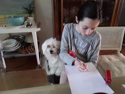 Mon chien Sencha m'aide à répondre aux questions de big challenge! Blanche collège LéonXIII à Châteauroux