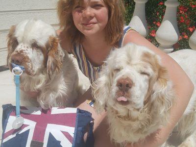 Saint Maixent l'école Collège Denfert Rochereau  Avec mes deux clumbers chiens de race anglaise