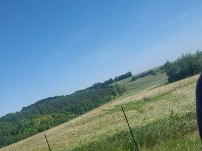 Collège le point du jour à Auneuil    Voici mon jardin ainsi que le champs