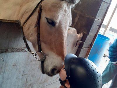 College st Joseph a wattrelos  Louna Spriet mon sport sais l'équitation et j aime se chevale la car je l ai tout le temp et elle et câlineuse et elle fait plain de bisous avec moi .