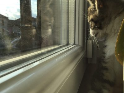 Verdun collège Sainte Anne  Voici la chatte Plume qui regarde les voiture passée.