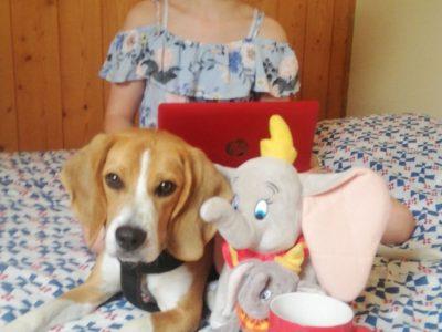 Ribemont Collège Antoine Nicolas de Condorcet.  J'espère avoir réussi le concours avec l'aide de mon chien!!!!!!