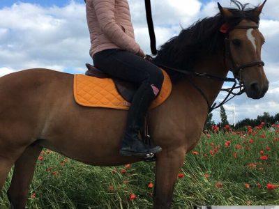 Roye, école collège Jeanne D'arc Voici une photo de moi et de mon poney j'aime l'Anglais
