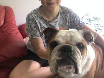 LIMOGES COLLEGE BEAUPEYRAT   Paulette le bulldog anglais voulait absolument participer au Big Challenge ;)