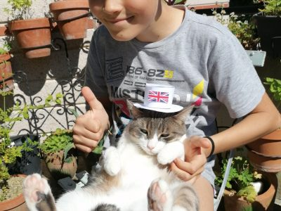 Perigueux Bertran de Born Neil Courbot ludwiczak  the cat with beautiful hat DIY