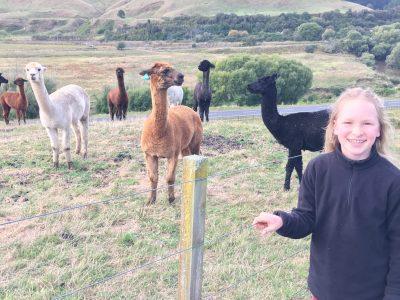 Mon voyage en nouvelle zéland
