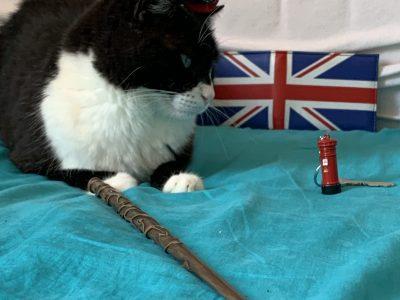 Collège st Jeanne d'arc a st Maximin la st baume, Bonjour voici une photo de mon chat (le plus beau chat du monde !)avec des objets acheté en Ecosse et en Angleterre sur le lieu. Merci, Margaux Dejean