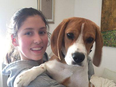 Marlenheim collège Grégoire de tours. Voici Mila mon petit beagle anglais !