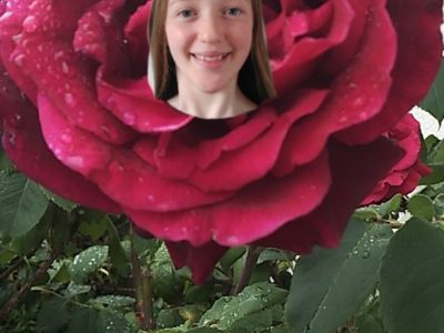 21000 Dijon Collège Saint Joseph  Voici l'emblème de l'Angleterre : la rose rouge appelée Rose Tudor. Aujourd'hui utilisée par l'équipe de rugby notamment !  Bye
