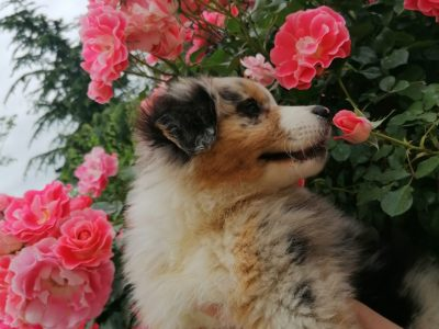 Perpignan, St Louis de Gonzague college.