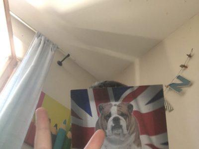 Calvi  Jean Felix Orabona  je suis devenu un chien du Royaume Uni