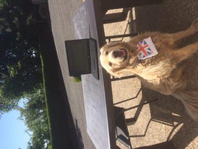 sint souveur le vicomte : Liot floriane : barbey d'aurevilly  mon chien a participer pour la photo