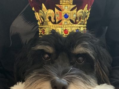 Photo prise par Maximilien Collège Saint Louis au PUY EN VELAY(43) Even my dog is crazy about English!  God save the doggy king!